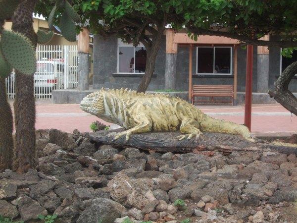 אמזונס ואיי גלאפאגוס 2012 468