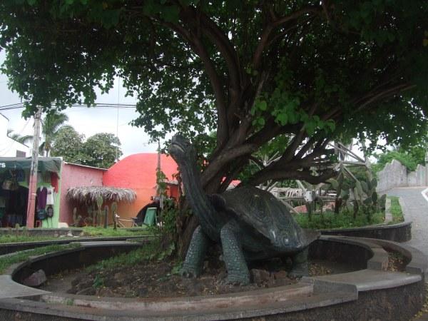 אמזונס ואיי גלאפאגוס 2012 502