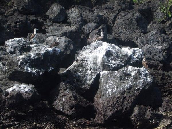 אמזונס ואיי גלאפאגוס 2012 517