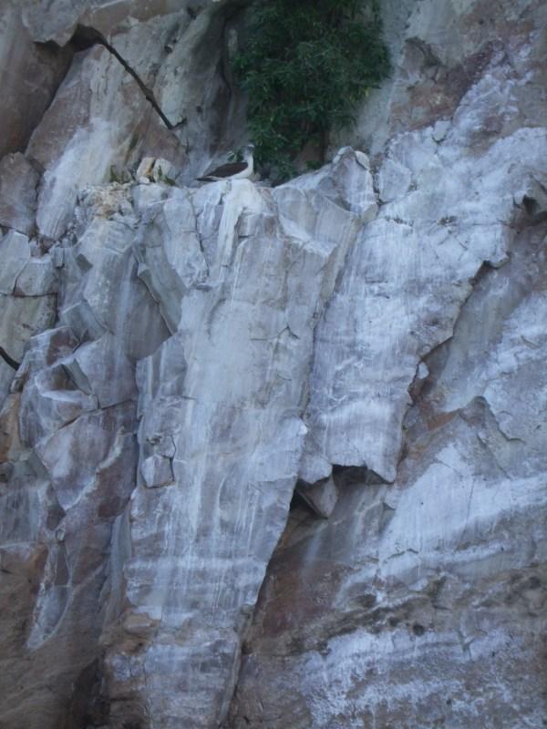 אמזונס ואיי גלאפאגוס 2012 581