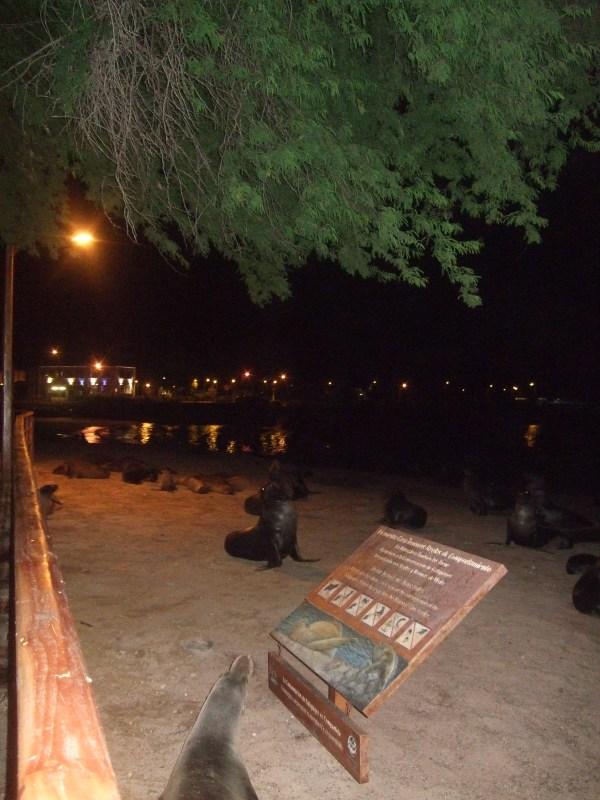 אמזונס ואיי גלאפאגוס 2012 252